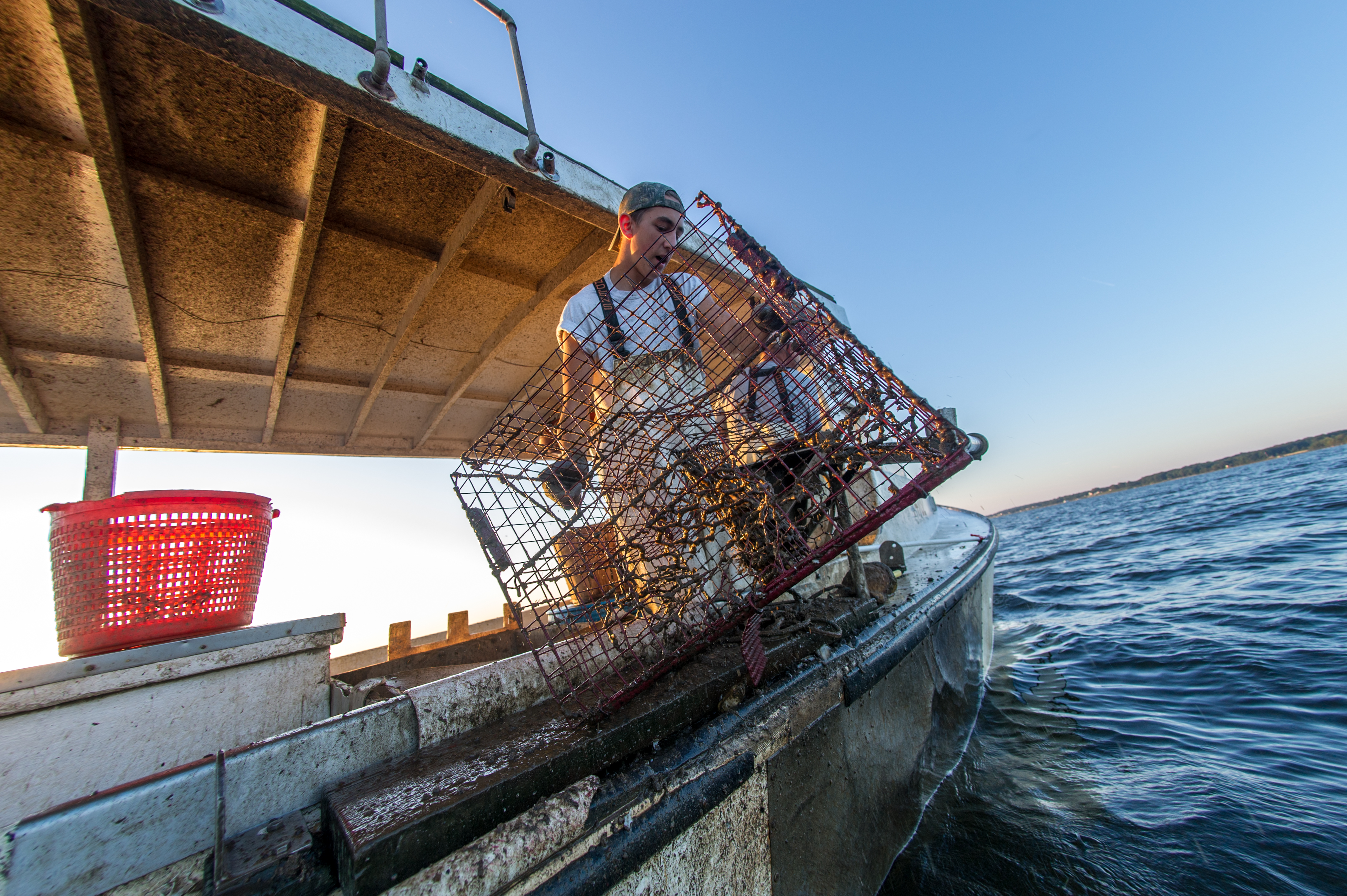 Governor Hogan Announces COVID-19 Relief for Agriculture and Seafood Producers