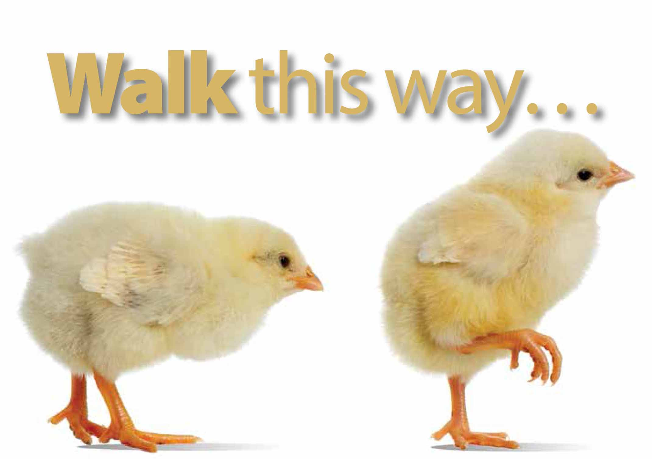 Walk this Way Chicks