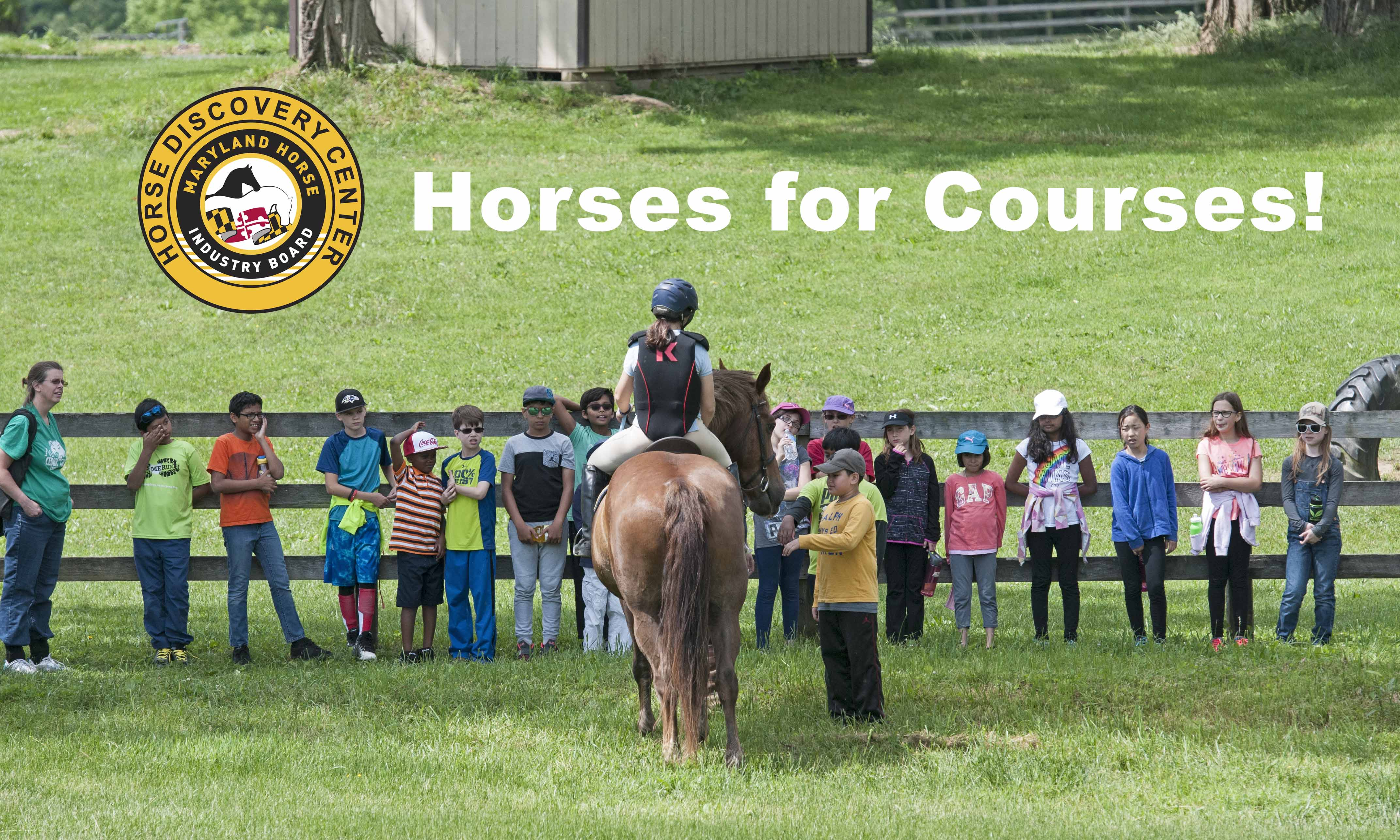 Horses for Courses!