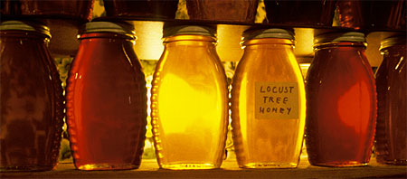 locust tree honey